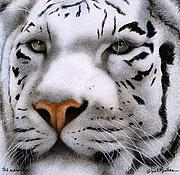 White Tiger Framed Prints - The Maharajah... Framed Print by Will Bullas