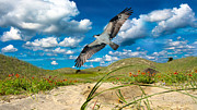 North Carolina Birds Prints - The Majestic  Print by Betsy A Cutler East Coast Barrier Islands