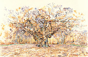 Inktense Prints - The Major Oak of Sherwood Forest Print by David Evans