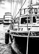 Sail Fish Prints - The Marina Print by Laurie Martin