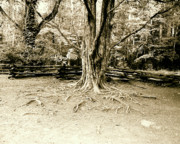 Tree Roots Photos - The Matriarch by Scott Pellegrin