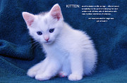 The Meaning Of A Kitten Print by Elaine Manley