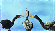 Cormorants Posters - The Mediation 2 Poster by Fraida Gutovich
