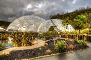 Mediterranean Plants Prints - The Mediterranean Biome Print by Rob Hawkins