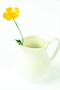 Artistic Photo Prints - The Milk Jug And The Butter Cup Print by Constance Fein Harding