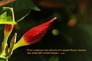 Gerlinde Keating - Keating Associates Inc - THE MIRACLE OF A SINGLE FLOWER