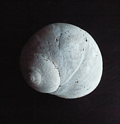 Lynn Wohlers - The Moon Shell