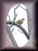 Patricia Keller Posters - The Mourning Dove Poster by Patricia Keller