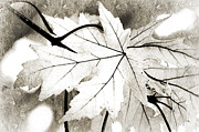 Seasonal Mixed Media Posters - The Mysterious Leaf Abstract BW Poster by Andee Photography