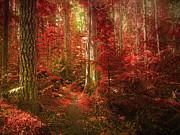 The Mystic Forest Print by Tara Turner