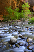 Virgin River Prints - The Narrows A Place To Pause Print by Bob Christopher