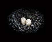 Bird Metal Prints - The Nest Metal Print by Edward Fielding