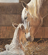 Barn Drawing Drawings - The New Arrival Is Here by Helen Bailey