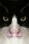 Kitty Cat Photo Prints - The Nightmare  Print by Lynn Andrews