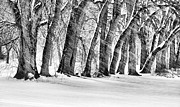 City Snow Prints - The Noreaster BW Print by JC Findley