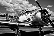 Monotone Prints - The North American T-6 Texan Print by David Patterson
