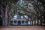 Andy Crawford - The Oaks Plantation