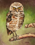 Burrowing Owl Framed Prints - The Observer Framed Print by Eve  Wheeler