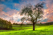 Spring Scenes Posters - The Old Apple Tree at Dawn Poster by Debra and Dave Vanderlaan