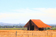 Wine Country Prints - The Old Barn 5D24404 Print by Wingsdomain Art and Photography