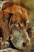 German Pointer Prints - The old boy Print by Dragica  Micki Fortuna