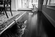 Hardwood Floor Framed Prints - The old cat and the new puppy Framed Print by Diane Diederich