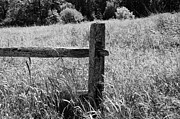 Sharon L Stacy - The Old Fence