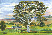 Farm Fields Drawings Framed Prints - The Old Gum Tree in Oz  Framed Print by Carol Wisniewski
