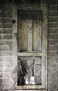 Decaying Digital Art Prints - The Old Lowman Door Print by Brian Wallace