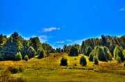 Fir Trees Photos - The Old Maple Ridge Ski Area - Old Forge NY by David Patterson