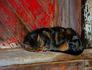 Julie Dant Artography Metal Prints - The Old Mill Cat Metal Print by Julie Dant