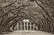Oak Alley Plantation Photo Prints - The Old South sepia Print by Steve Harrington