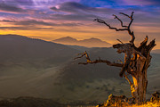 Dead Tree Prints - The Old Tree And Diablo Print by Marc Crumpler