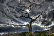Lone Pine Prints - The Old Tree Print by Bob Christopher