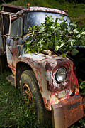 Kudzu Framed Prints - The Old Truck Framed Print by Debra and Dave Vanderlaan