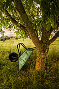 Fruit Tree Art Photo Framed Prints - The Old Wheelbarrow Framed Print by Debra and Dave Vanderlaan