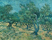 Vangogh Framed Prints - The olive grove Framed Print by Vincent van Gogh
