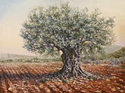 Israel Painting Originals - The olive tree in the valley by Miki Karni