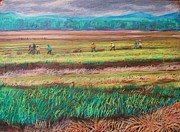 Farming Mixed Media - The Onion Fields by Lorrie Sniderman