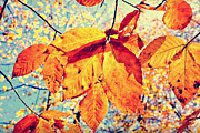 Autumn Photos - The Optimists Palette by Katya Horner