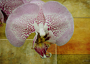 North Vancouver Digital Art Posters - The Orchid Poster by Gene Tewksbury