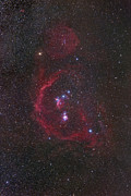Molecular Clouds Prints - The Orion Constellation Print by Robert Gendler