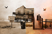 Oceanfront Metal Prints - The Osprey and the Pelican Metal Print by East Coast Barrier Islands Betsy A Cutler