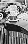 Jamie Pham - The Packard Eagle Hood Ornament at the Concours d Elegance.