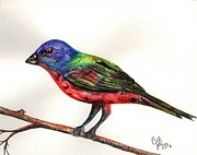 Chris Bajon Jones - The Painted Bunting