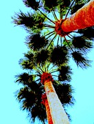 Palm Trees Fronds Prints - The Palms Print by Randall Weidner