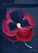 Alizarin Crimson Paintings - The Pansy by Katherine Miller