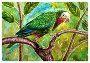 Katerina Kovatcheva - The parrot