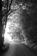 Black And White Nature Landscapes Posters - The Path Ahead Poster by Andrew Soundarajan