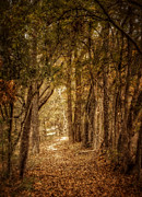 Autumn Trees Metal Prints - The Path Not Taken Metal Print by Scott Norris